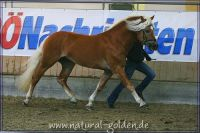 k2011_02_04_Acilliano_031