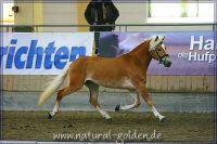 k2011_02_04_KoerungStadl_656