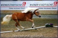 k2011_02_04_Steinkogel_028