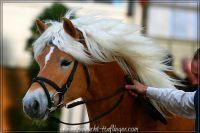 kk2011_03_Amedi