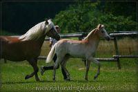 c2011_07_02_Serpico_130_021