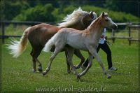 c2011_07_02_Serpico_130_038