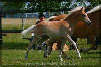 c2011_07_02_Serpico_131_017