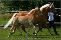 c2011_07_02_Serpico_131_026