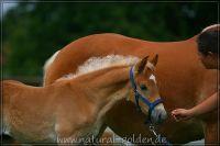 c2011_07_02_Serpico_133_006