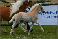c2011_07_02_Wuestenprinz_199_034