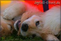 d2011_08_20_Puppies_003