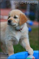 d2011_08_20_Puppies_010