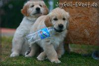 d2011_08_20_Puppies_025