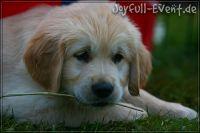 d2011_08_20_Puppies_049