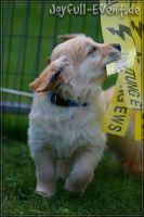 d2011_08_20_Puppies_055
