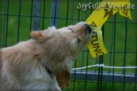 d2011_08_20_Puppies_059