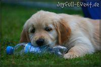 d2011_08_20_Puppies_069