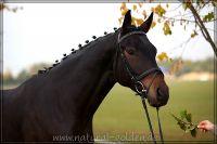 c2011_10_22_Duerer_380