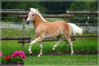cc2012_07_01_Kat.Nr.02_Natale_031
