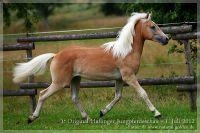 cc2012_07_01_Kat.Nr.02_Natale_086