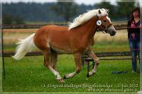 cc2012_07_01_Kat.Nr.06_Navaro_024