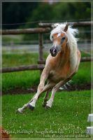 cc2012_07_01_Kat.Nr.14_Nizza_035