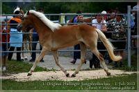 cc2012_07_01_Kat.Nr.17_Susa_005