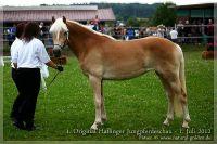 cc2012_07_01_Kat.Nr.18_Selma_006