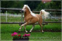 cc2012_07_01_Kat.Nr.19_Swenja_054