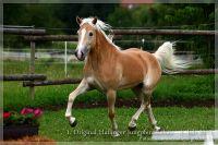 cc2012_07_01_Kat.Nr.24_Mahala_066