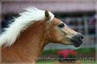 cc2012_07_01_Kat.Nr.29_QBelinda_094
