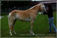 cc2012_07_01_Kat.Nr.32_NottingsStarlight_001