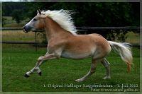 cc2012_07_01_Kat.Nr.32_NottingsStarlight_052