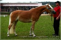 cc2012_07_01_Kat.Nr.33_BellaDonna_010