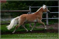 cc2012_07_01_Kat.Nr.36_Stelia_062