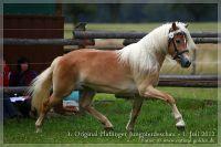 cc2012_07_01_Kat.Nr.37_Amelie_034