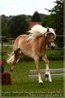 cc2012_07_01_Kat.Nr.37_Amelie_039