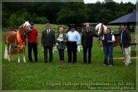 cc2012_07_01_OHD_Jungpferdeschau_008