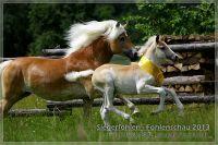 vv2013_06_22_Siegerfohlen_Wellensteyn_139
