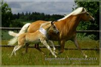 vv2013_06_22_Siegerfohlen_Wellensteyn_145