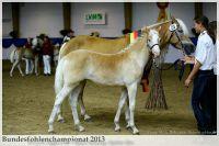 aaa2013_08_Bundesfohlenchampionat_025_Sieger_SF_003
