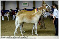 aaa2013_08_Bundesfohlenchampionat_025_Sieger_SF_004