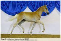 aaa2013_08_Bundesfohlenchampionat_027_ReserveSieger_SF_022