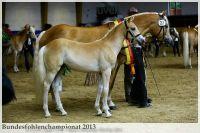aaa2013_08_Bundesfohlenchampionat_027_ReserveSieger_SF_050