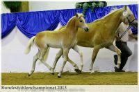 aaa2013_08_Bundesfohlenchampionat_035_Rachel_016