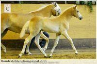aaa2013_08_Bundesfohlenchampionat_035_Rachel_024