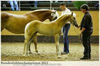 aaa2013_08_Bundesfohlenchampionat_036_Nena_vNottingHill_003