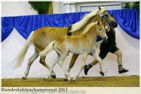 aaa2013_08_Bundesfohlenchampionat_038_vStano_029