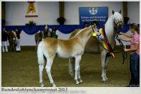 aaa2013_08_Bundesfohlenchampionat_060_vStano_002