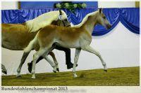 aaa2013_08_Bundesfohlenchampionat_063_Bachelor_018