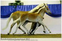 aaa2013_08_Bundesfohlenchampionat_063_Bachelor_045