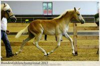 aaa2013_08_Bundesfohlenchampionat_063_Bachelor_061