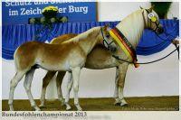 aaa2013_08_Bundesfohlenchampionat_063_Bachelor_109