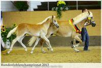 aaa2013_08_Bundesfohlenchampionat_063_Bachelor_113